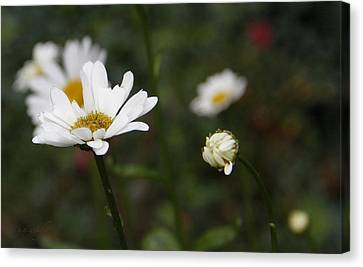 Smiling Daisies Canvas Print by Yvonne Wright