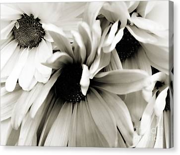 Daisy Cluster In Black And White Canvas Print by Nancy E Stein