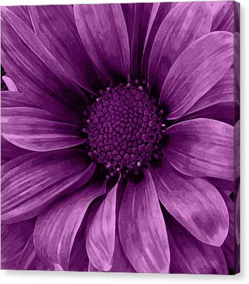 Daisy Daisy Grape Canvas Print by Angelina Vick