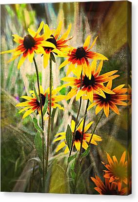 Daisy Do Canvas Print by Marty Koch