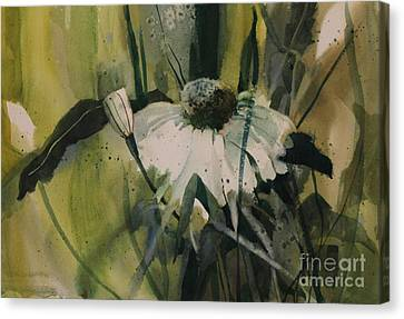 Daisy Canvas Print by Elizabeth Carr