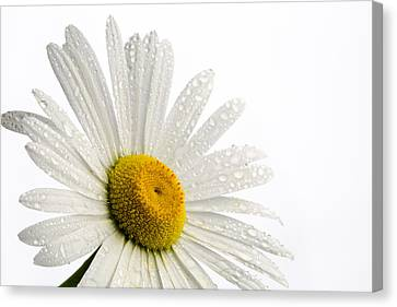 Designs On Face Canvas Print - Daisy Face by Mary Jo Allen