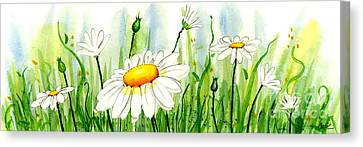 Daisy Field Canvas Print by Annie Troe