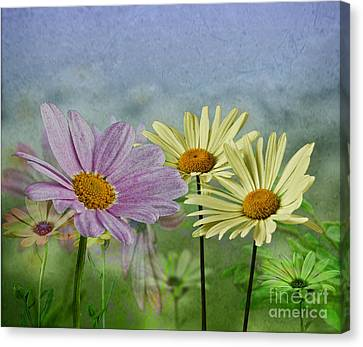 Canvas Print featuring the digital art Daisy Garden by Shirley Mangini