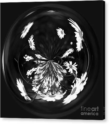 Daisy Globe Canvas Print