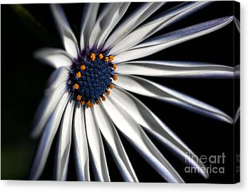 Daisy Heart Canvas Print