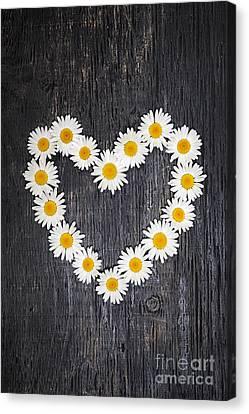 Daisy Heart On Dark Wood Canvas Print