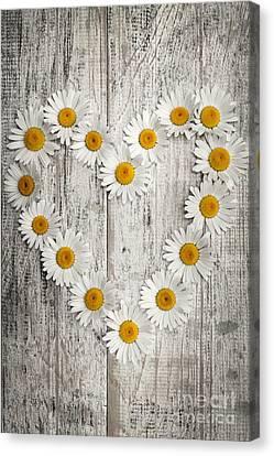 Daisy Heart On Old Wood Canvas Print