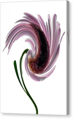 Daisy In A Twirl Canvas Print by Terence Davis
