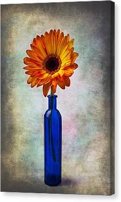 Daisy In Blue Vase Canvas Print