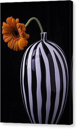 Daisy In Striped Vase Canvas Print