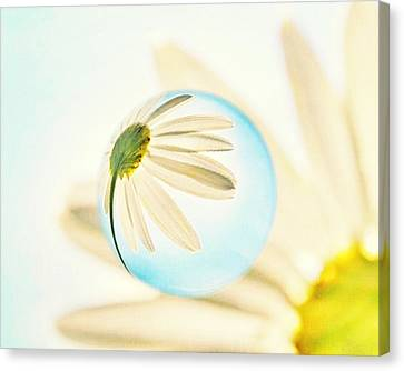 Daisy In The Bubble Canvas Print