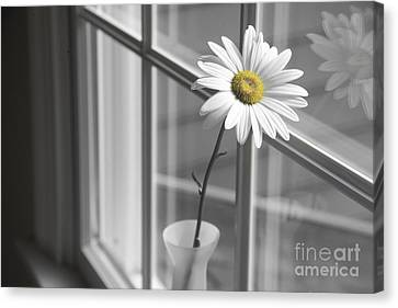 Black And Yellow Canvas Print - Daisy In The Window by Diane Diederich