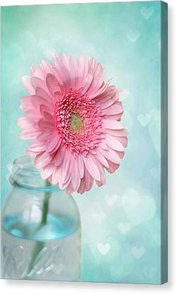 Pink Flower Canvas Print - Daisy Love by Amy Tyler