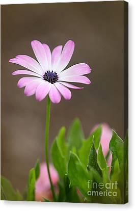 Florida Flowers Canvas Print - Daisy Mae by Sabrina L Ryan
