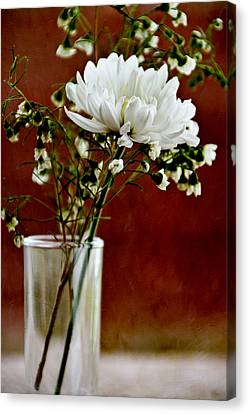 Daisy Mum On Red 3 Canvas Print by Angelina Vick
