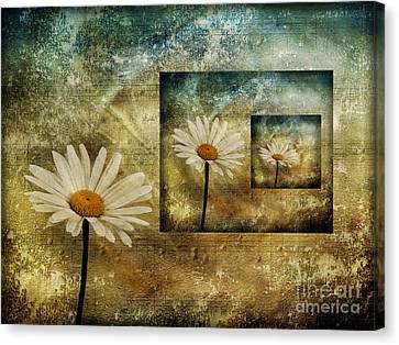 Daisy Shadows Canvas Print