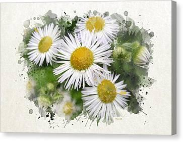 Delicate Canvas Print - Daisy Watercolor Art by Christina Rollo