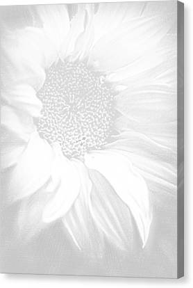 Sunflower White On White Canvas Print by Tony Rubino