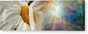 Daisy With Hubble Cosmos Canvas Print by Panoramic Images