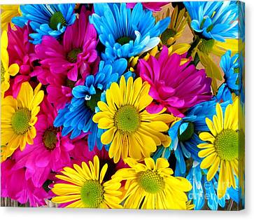 Canvas Print featuring the photograph Daisys Flowers Bloom Colorful Petals Nature by Paul Fearn