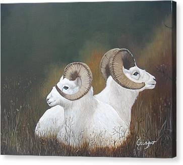 Dall Rams Canvas Print by Jean Yves Crispo