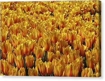 Canvas Print featuring the photograph Dallas Blooms by John Babis