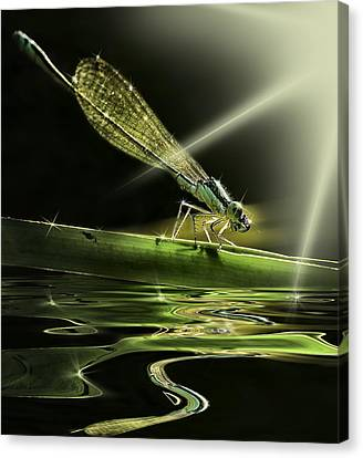 Damsel Dragon Fly  With Sparkling Reflection Canvas Print by Peter v Quenter