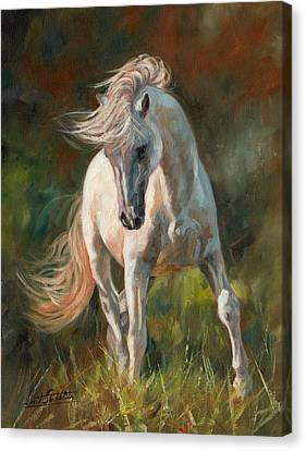 Stallion Canvas Print - Dance Like No One Is Watching by David Stribbling