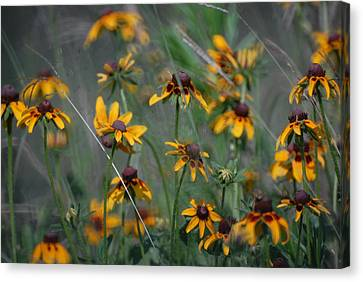 Canvas Print featuring the photograph Dance Of Flowers by Susan D Moody