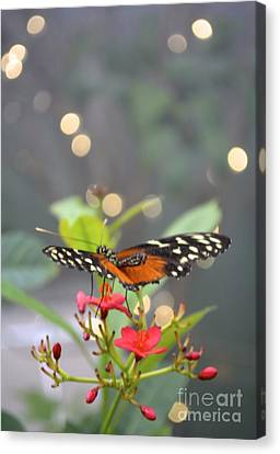 Canvas Print featuring the photograph Dance Of The Butterfly by Carla Carson