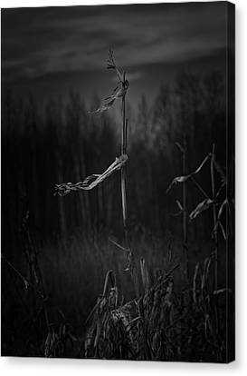 Dance Of The Corn Canvas Print by Susan Capuano
