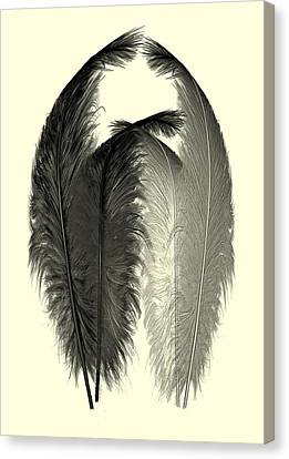 Dance Of The Feathers Canvas Print by David Dehner