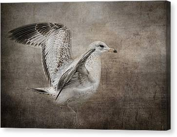 Dance Of The Lone Gull Canvas Print