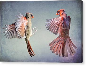Dance Of The Redbirds Canvas Print