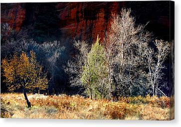 Dance Of Trees Canvas Print by Peter Cutler
