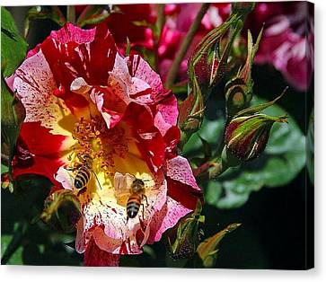 Canvas Print featuring the photograph Dancing Bees And Wild Roses by Absinthe Art By Michelle LeAnn Scott