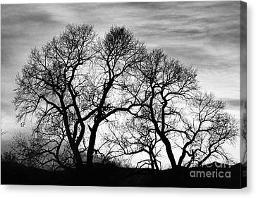 Epic Canvas Print - Dancing Forest Trees In Black And White by James BO  Insogna