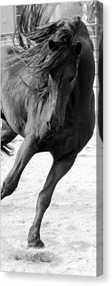 Dancing In Time Canvas Print by Royal Grove Fine Art