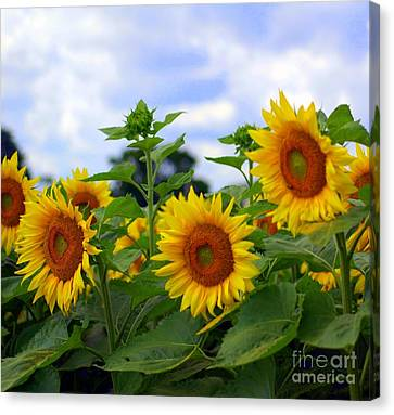Dancing Sunflowers Canvas Print by Kathleen Struckle