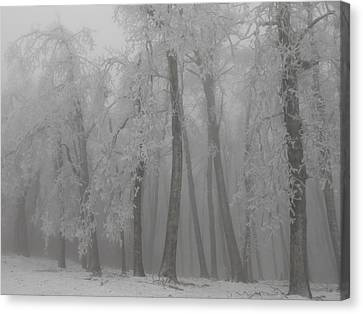 Dancing Trees Canvas Print by Diannah Lynch