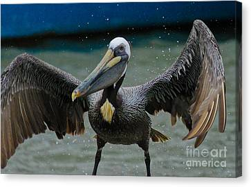 Dancing With A Pelican Canvas Print