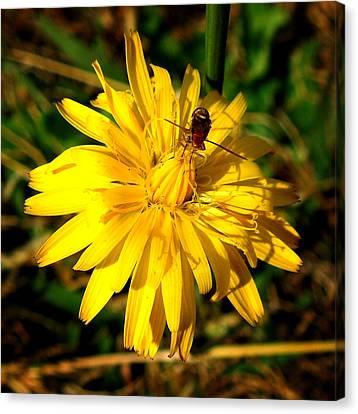 Dandelion And Bug Canvas Print