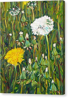 Dandelion Bouquet Canvas Print