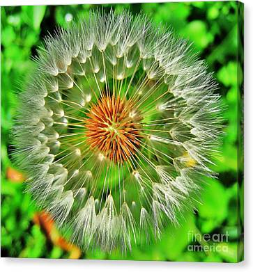 Dandelion Circle Canvas Print