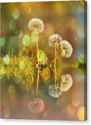 Dandelion Delight Canvas Print by Fraida Gutovich