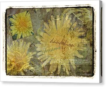 Dandelion Dreams Canvas Print by Terri Harper
