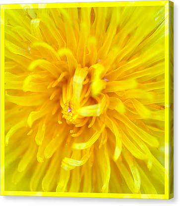 Dandelion In Macro Canvas Print by Tommytechno Sweden