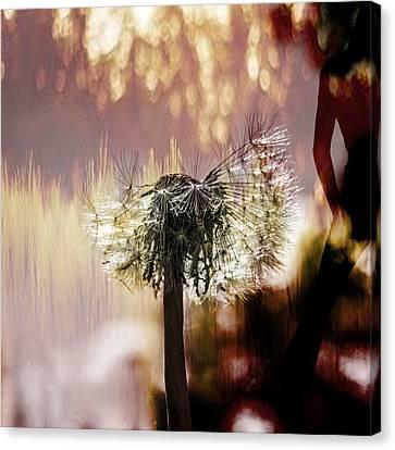 Dandelion In Summer Canvas Print by Tommytechno Sweden