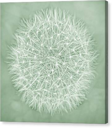 Dandelion Macro Abstract Soft Green Canvas Print by Jennie Marie Schell